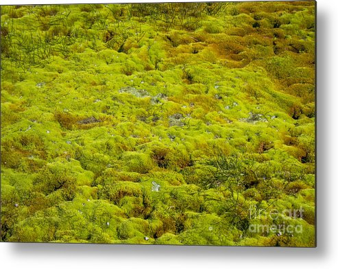 Green Metal Print featuring the photograph Green Moss by Patricia Hofmeester