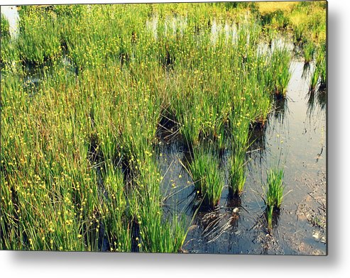 Agriculture Metal Print featuring the photograph Green Natural Beauty by Yajhyara Maria