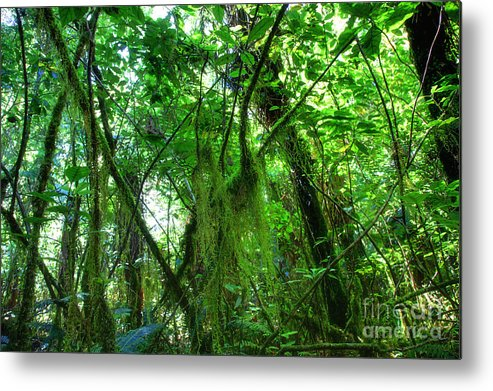 Dschungel Metal Print featuring the photograph Green Rain Forest by Fabian Roessler