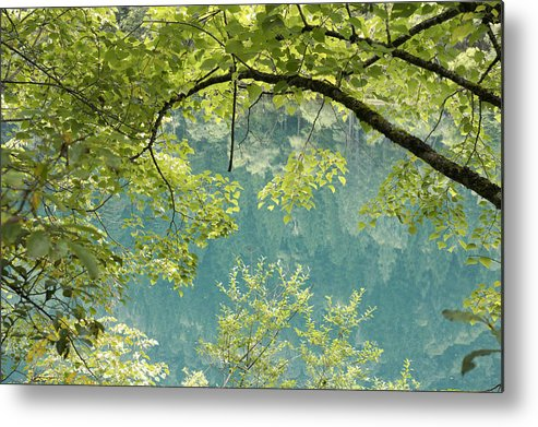 Lake Metal Print featuring the photograph Green Trees Over Blue Water by Nelson Peng
