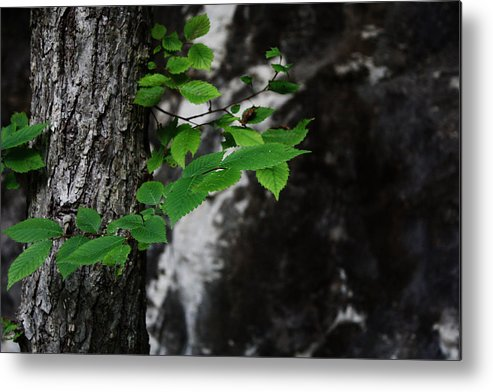 Green Metal Print featuring the photograph Green by Valerie Loop