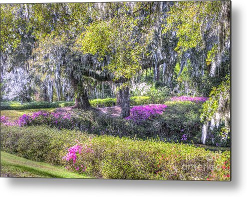 Azalea Metal Print featuring the photograph Grounds Of Middleton by Dale Powell