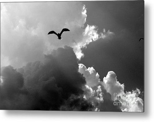 Seascapes Metal Print featuring the photograph Gull In Flight Mb059bw by Earl Johnson