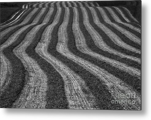 Landscape Metal Print featuring the photograph Harvest by Mychelle Tremblay