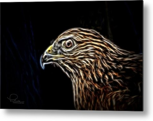 Hawk Metal Print featuring the photograph Hawk by Ludwig Keck