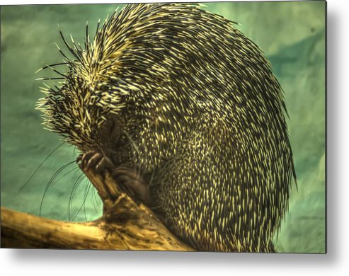 Cute Sleeping Animals Metal Print featuring the photograph Hdr - Animals by Dem Wolfe