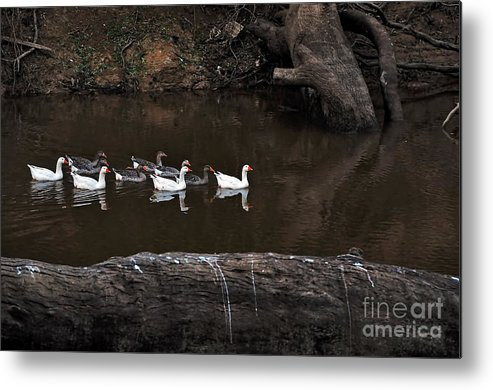 Photography Metal Print featuring the photograph Homeward Bound by Kaye Menner