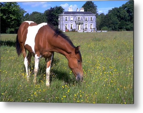 Horse Metal Print featuring the photograph Horse Grazes Near St. Clarens by Carl Purcell