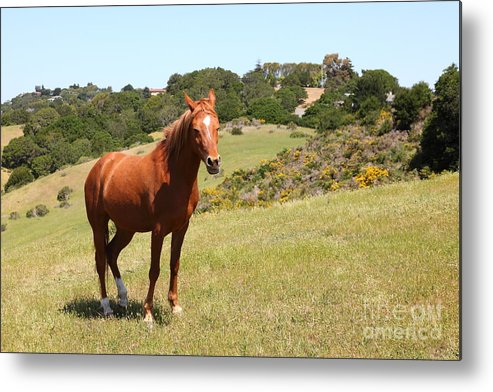 Marin Metal Print featuring the photograph Horse Hill Mill Valley California 5d22679 by Wingsdomain Art and Photography