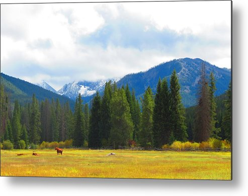 Horses Metal Print featuring the photograph Horse View by Connor Ehlers