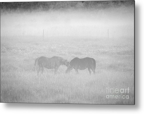 Landscape Metal Print featuring the photograph Horses In The Fog by Cheryl Baxter