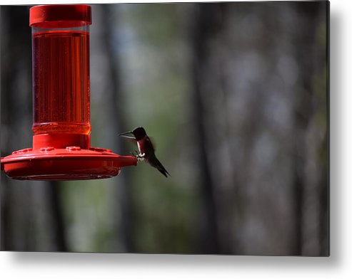 Bird Metal Print featuring the photograph Hummingbirds 332 by Lawrence Hess