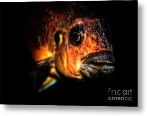 Fish Metal Print featuring the photograph I Am Watching You Too by Olga Hamilton