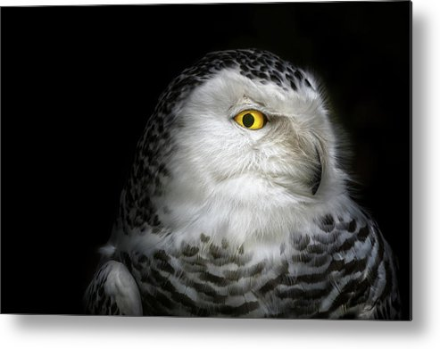 Animal Metal Print featuring the photograph I See You by Michael