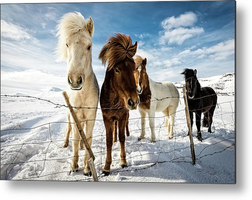 Landscape Metal Print featuring the photograph Icelandic Hair Style by Mike Leske