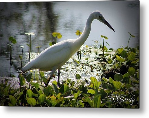 Wild Metal Print featuring the photograph In Search Of by Bridget Clardy