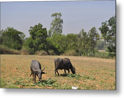 Together Metal Print featuring the photograph In The Fields by Bliss Of Art