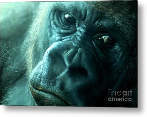 Gorilla Metal Print featuring the photograph In The Mirror by Theresa Willingham
