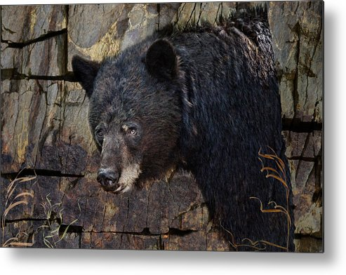 Black Bear Metal Print featuring the photograph Inconspicuous Bear by Ed Hall