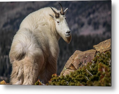 Wildlife Metal Print featuring the photograph Inspiration by Dillen Erb