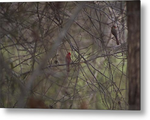 Red Metal Print featuring the photograph iSpy by Robert Tolli