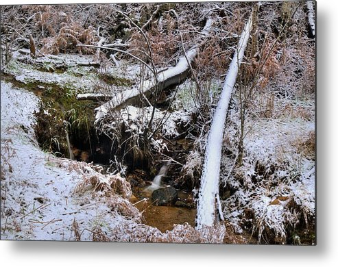 Nature Outdoors Snow Trees Bushes Water Dead Trees Walker Northern Arizona Prescott Groom Creek Metal Print featuring the photograph Ist Snow Of The Season by Thomas Todd