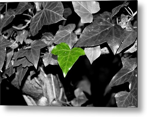 Ivy Metal Print featuring the photograph Ivy by April Allen