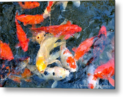 Koi Metal Print featuring the photograph Japanese Koi Pond by Debbie Kelly