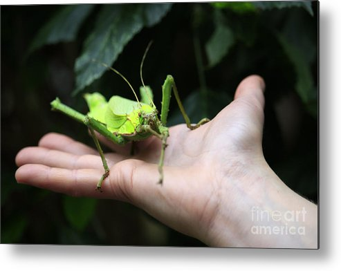 Jungle Nymph Metal Print featuring the photograph Jungle Nymph by Charline Xia