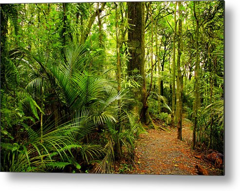 Forest Metal Print featuring the photograph Jungle Scene by Les Cunliffe