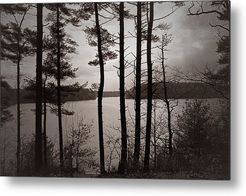 Lake Metal Print featuring the photograph Lake View by Ed Pearson