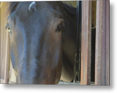 Horse Metal Print featuring the photograph Larry Headshot by Hailey Hart
