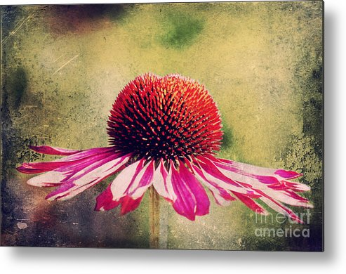 Echinacea Metal Print featuring the photograph Last Summer Feeling by Angela Doelling AD DESIGN Photo and PhotoArt
