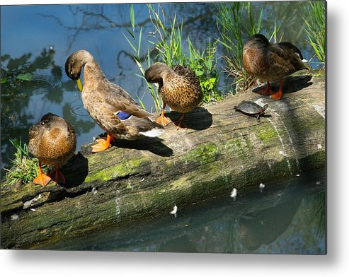 Olbrich Gardens Metal Print featuring the photograph Lazy Afternoon by Natural Focal Point Photography