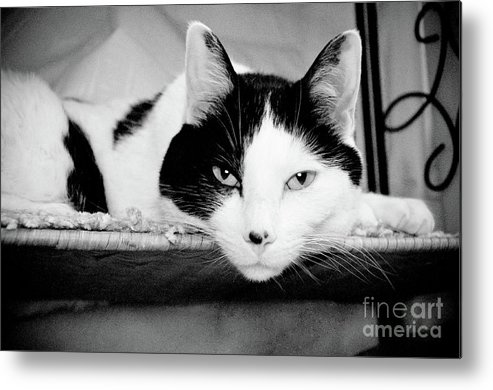 Andee Design Cat Metal Print featuring the photograph Le Cat by Andee Design