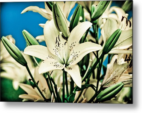 Lily Metal Print featuring the pyrography Lilies In White by Shirley Tinkham