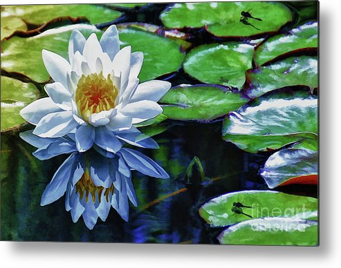 Pond Metal Print featuring the painting Lily And Dragon Flies by Elaine Manley