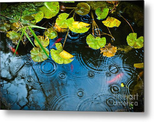 Goldfish Metal Print featuring the photograph Lily Pads Ripples And Gold Fish by Silvia Ganora