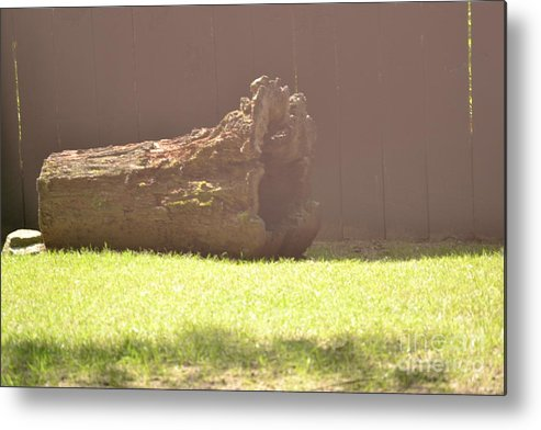 Log Metal Print featuring the photograph Log In Hazy Sunlight by Dennis Godin