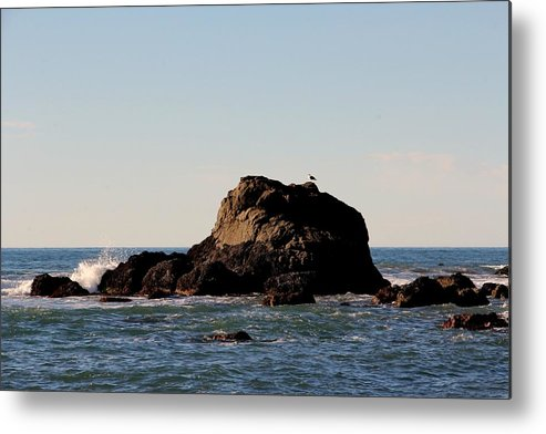 Landscape Metal Print featuring the photograph Lonely Bird by Lisa Thompson