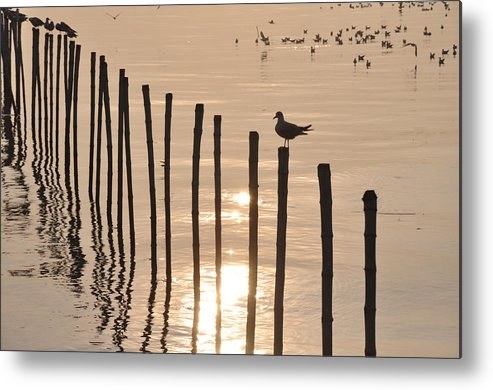 Beach Metal Print featuring the photograph Lonely Gull by Pisit Santikulluk