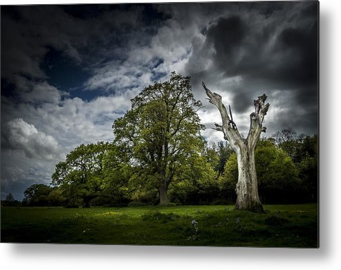 Tree Metal Print featuring the photograph Loner by John Sprague