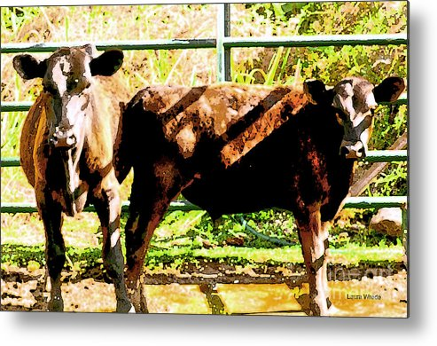 Cow Art Photographs Metal Print featuring the photograph Looking At You by Artist and Photographer Laura Wrede