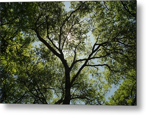 Blue Metal Print featuring the photograph Looking Up by Carrie Murphey