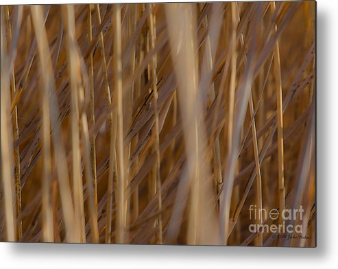 Abstract Photography Metal Print featuring the photograph Lost In The Reed by Jivko Nakev