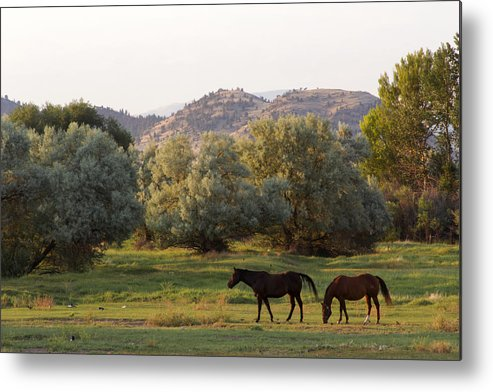 Horses Metal Print featuring the photograph Magpies And Horses by Dana Moyer