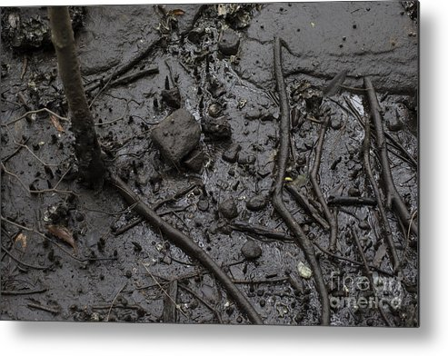 Mangrove Dark Roots Mud Sand Monochrome Sticks Water Wet Black Grey Metal Print featuring the photograph Mangrove Floor by Stephen Holland