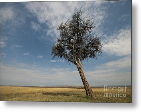 Africa Metal Print featuring the photograph Masai Mara National Reserve by John Shaw