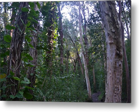 Maui Metal Print featuring the photograph Maui Forest by Evan Silver