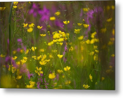 Meadow Metal Print featuring the photograph Meadow by Michal Stosel